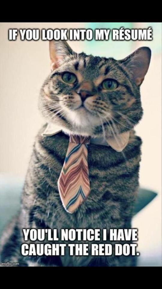 business cat - meme