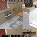 Les chats sont courageux... Un peut trop meme