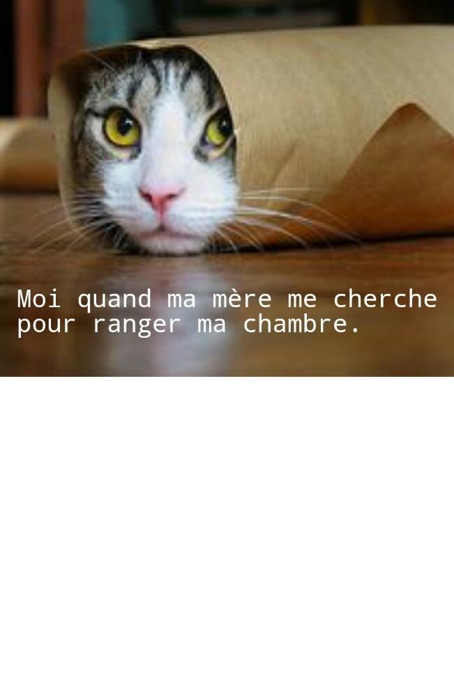 Chat...mouflé. - meme
