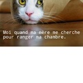 Chat...mouflé.
