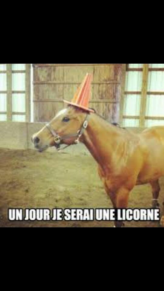 licorne - meme