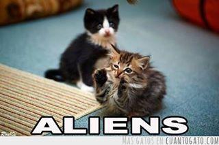 El titulo es un alien - meme