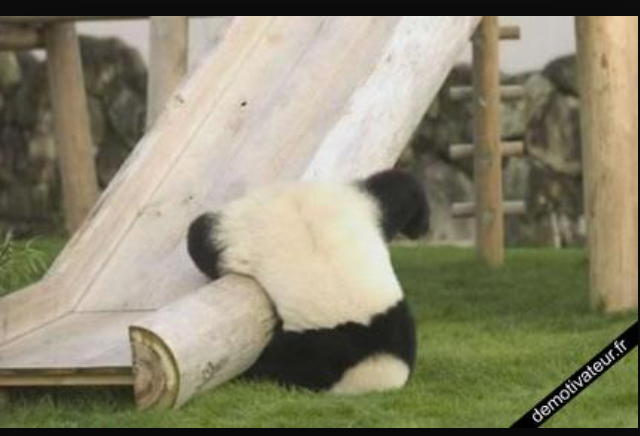 Pauvre panda  - meme