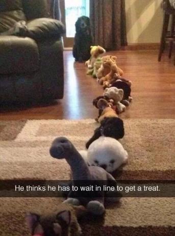 Dogs... - meme