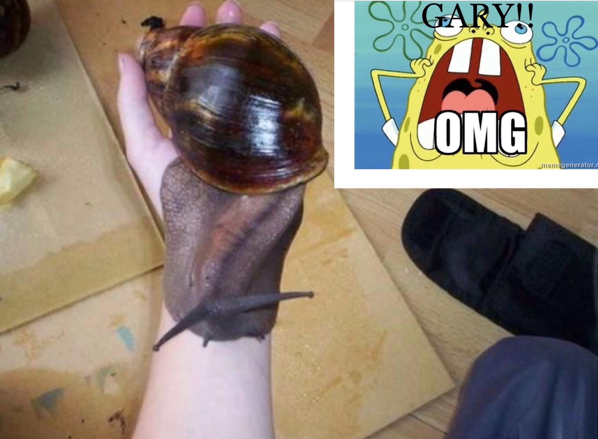 Perso cette escargot je le mange pas . - meme