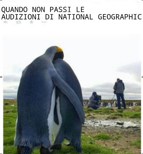 Poveri Pinguini - meme