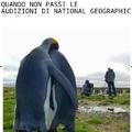 Poveri Pinguini
