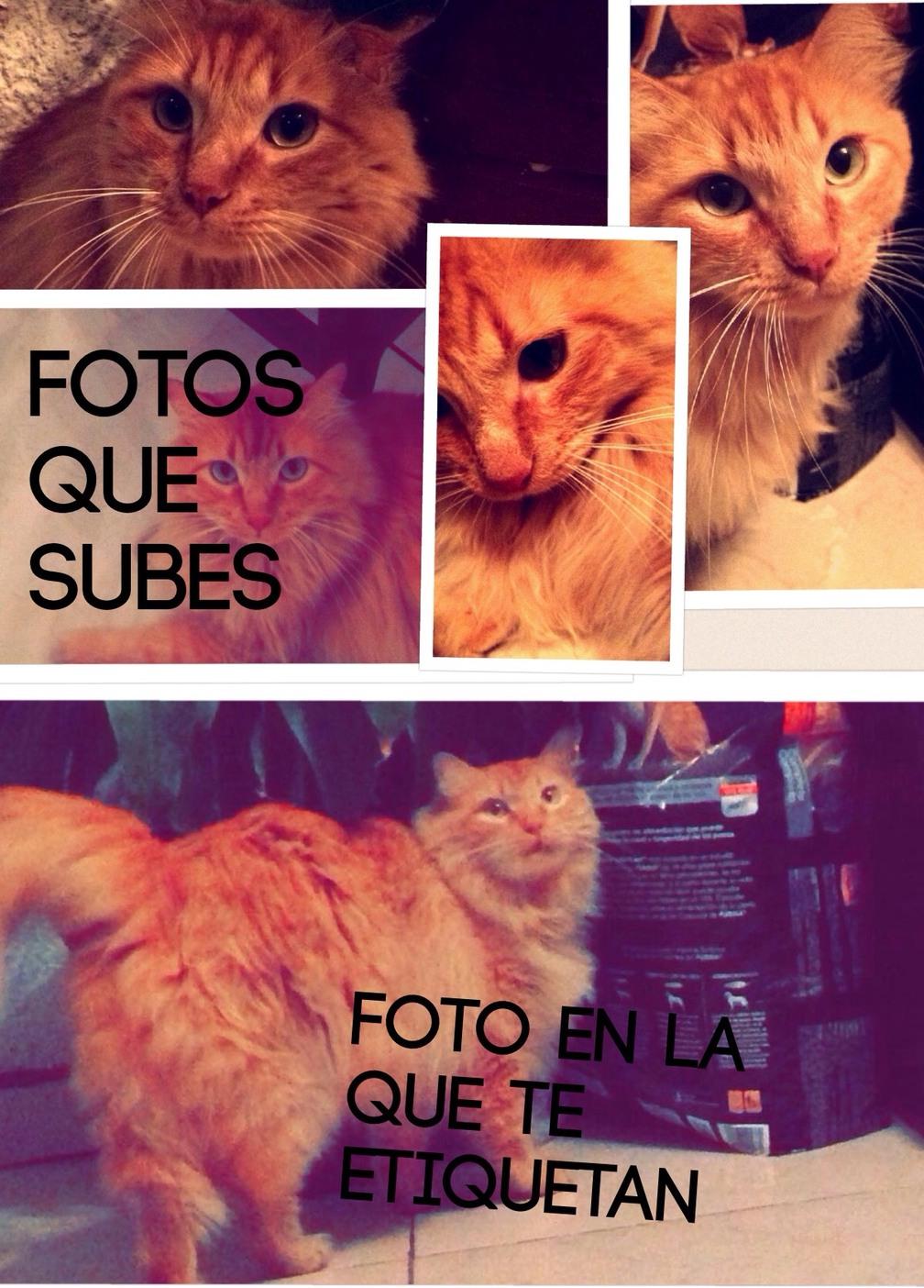 es mi gato :3 - meme