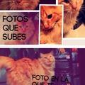 es mi gato :3