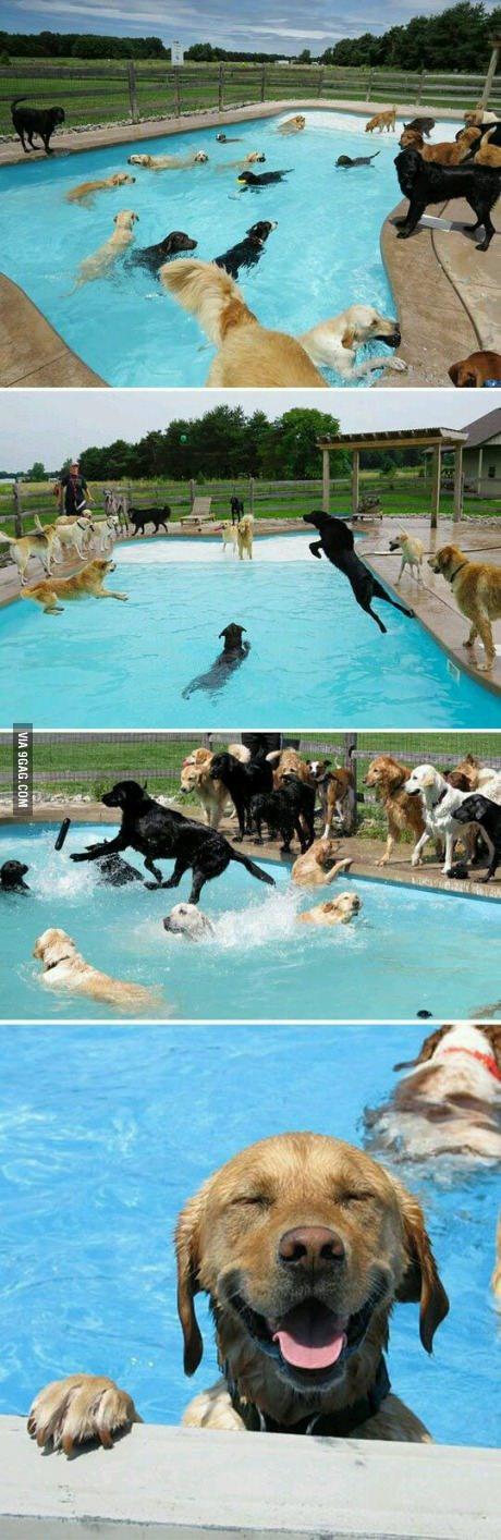 C o do partido em sua piscina meme by elba lazo2 0 for Piscina mund