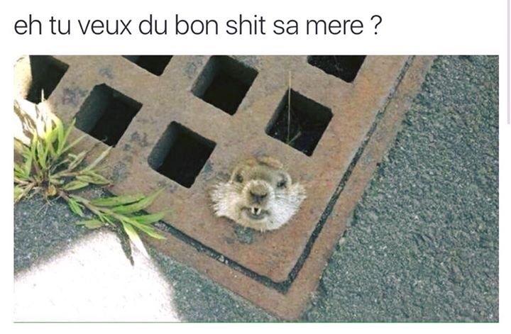 psst - meme