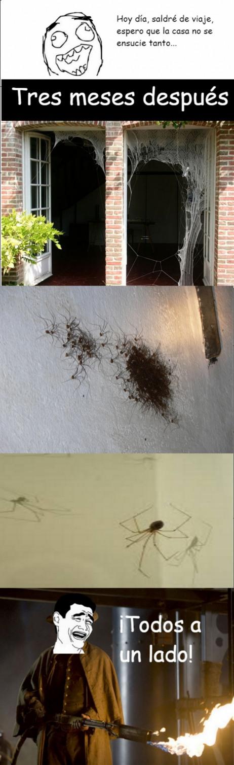 ¡Arañas! - meme