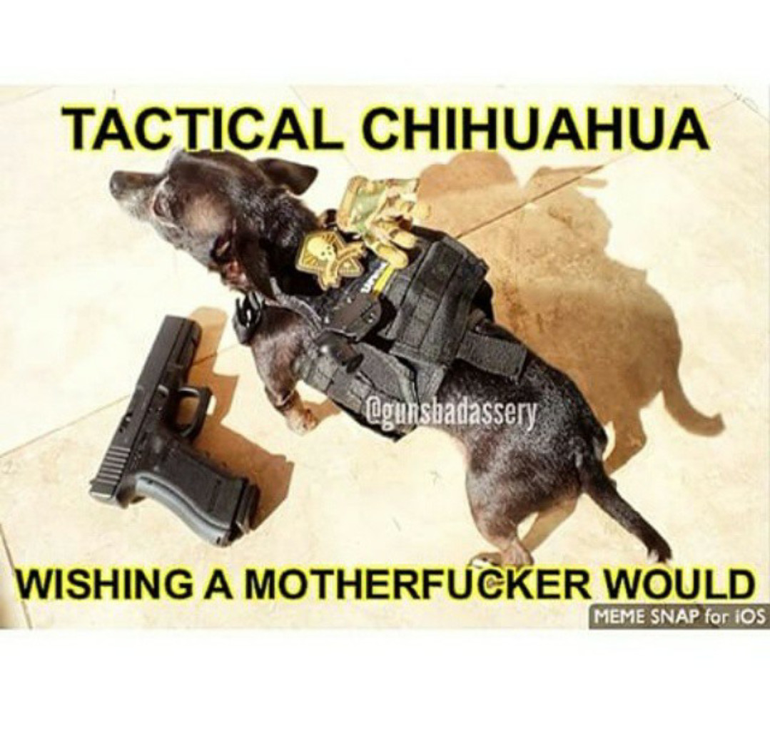 Tactical chihuahua - meme
