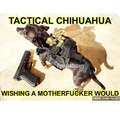 Tactical chihuahua