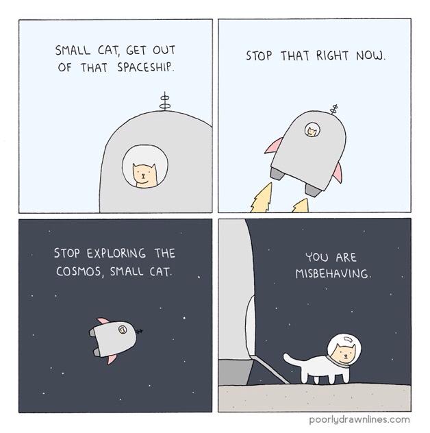 Misbehaving Small Cat - meme