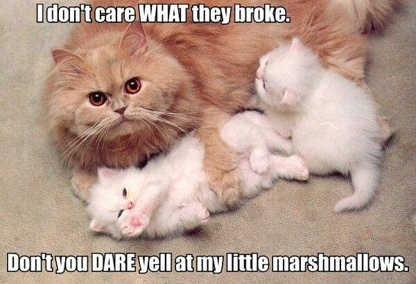 Marshmallows - meme