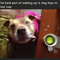 Yes I'd like my coffee with cream,  2 sugars,  and a tennis ball please
