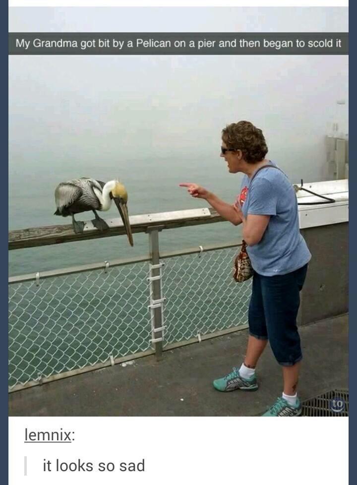 poor pelican - meme