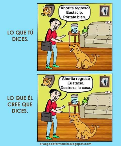 traductor de perros - meme