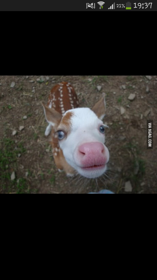 Mi vache mi biche xD - meme