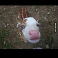 Mi vache mi biche xD