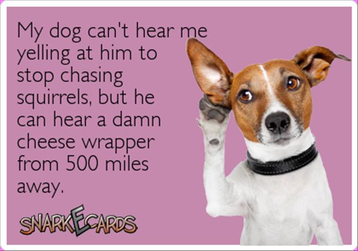 Damn dog - meme