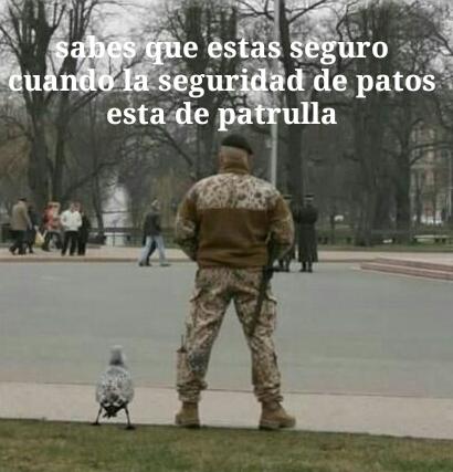 Seguridad de patos - meme