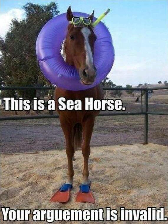 Sea horse - meme