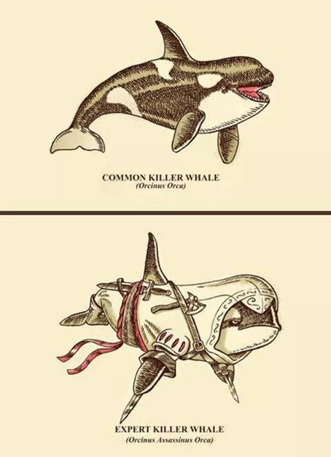 Having a whale of a time :-) - meme