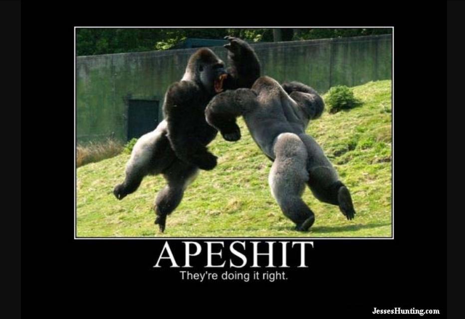 564e033735655 apes going apeshit meme by simon_the_space_mine ) memedroid