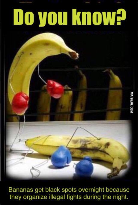 Envoie banane au 84 300, banane, au 84 300 - meme