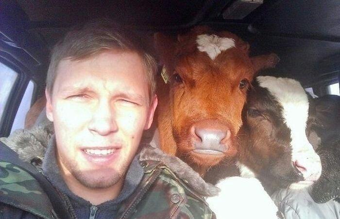 Selfie avec mes potes les vaches - meme