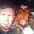 Selfie avec mes potes les vaches