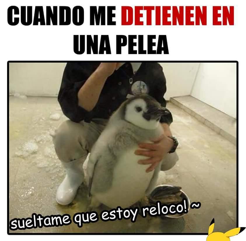 Pingüino - meme