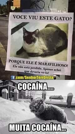 Cocaína - meme