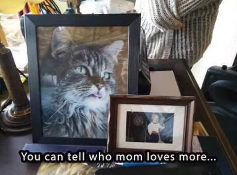 Pussy - meme