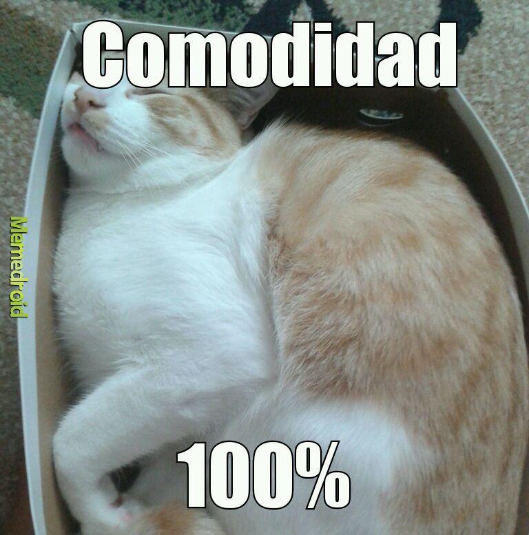 Gatos.... - meme