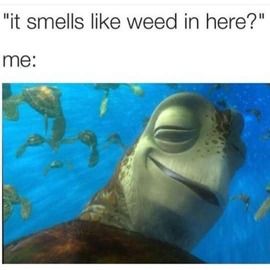 end comment is a pothead - meme