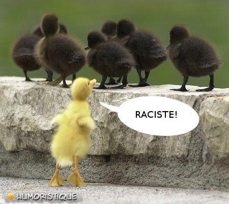 Même chez les poussins il y a des racistes! - meme