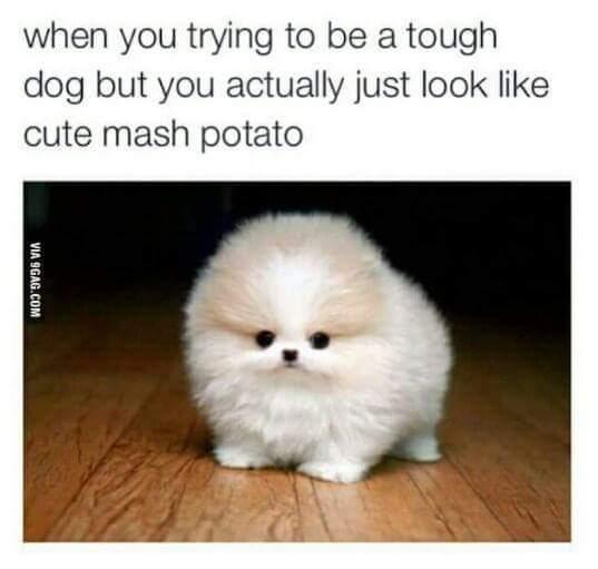 Act tough - meme