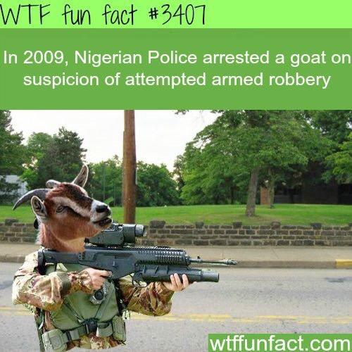 Nigerians - meme