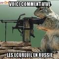 Ecureuil Russe
