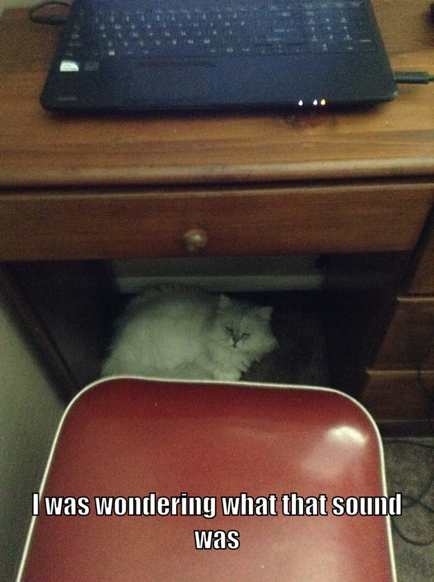 Cat under the desk - meme