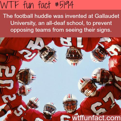 WTF Fun Fact - meme