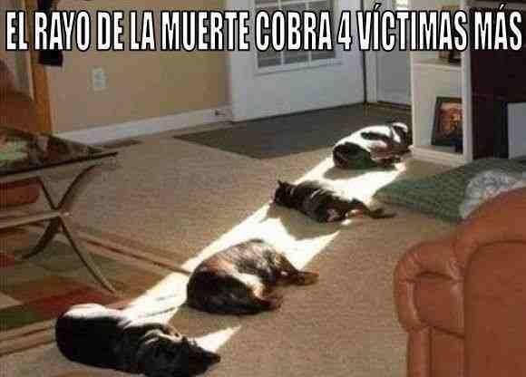 pobre gatitus :( - meme
