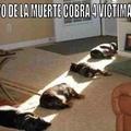 pobre gatitus :(