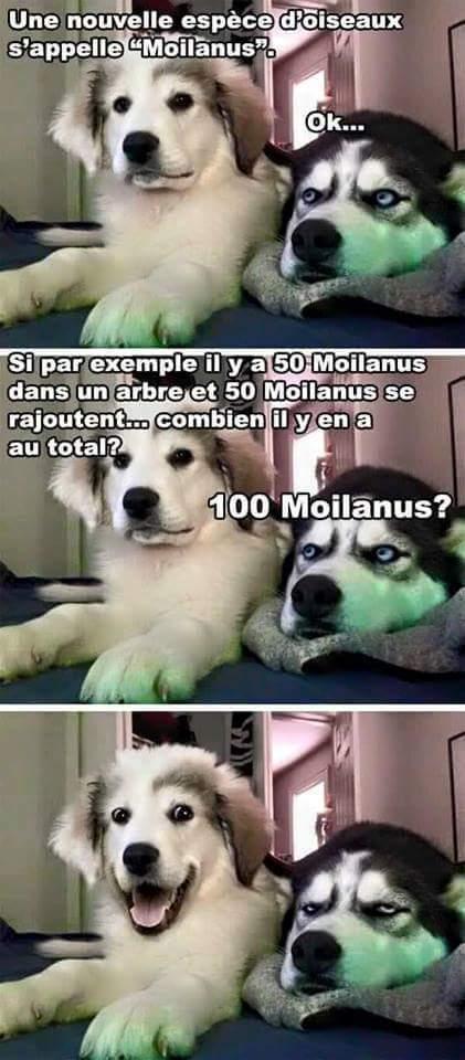 Humour de chien - meme