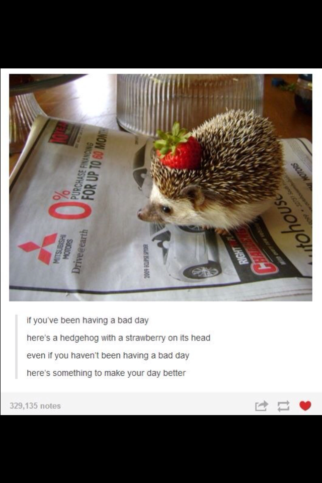 Strawberry hedgehog :3 - meme
