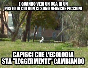 """IlCoccoDellaDomenica ~ Questa,lo ammetto, é molto scarsa secondo me, ma vediamo se piace questo meme di """"assestazione"""""""