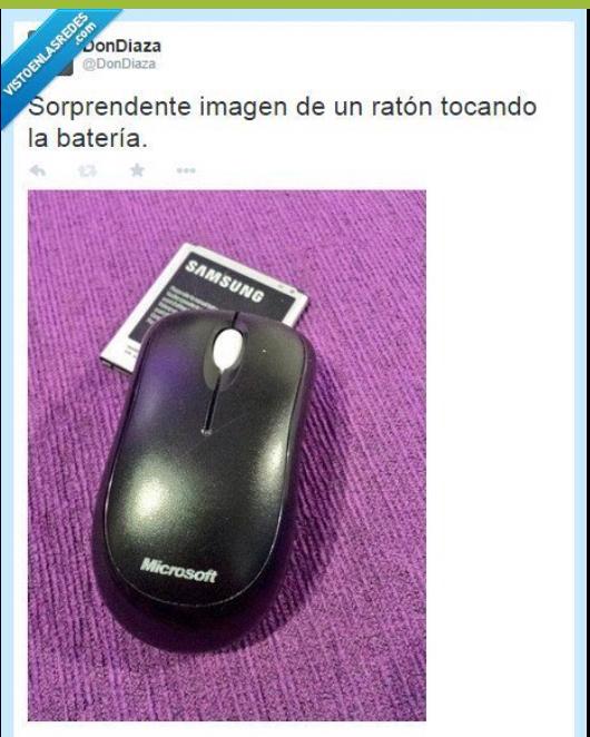 Raton - meme